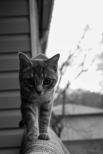 Cat Feline No People One Animal Outside Pets Portrait Wildlife