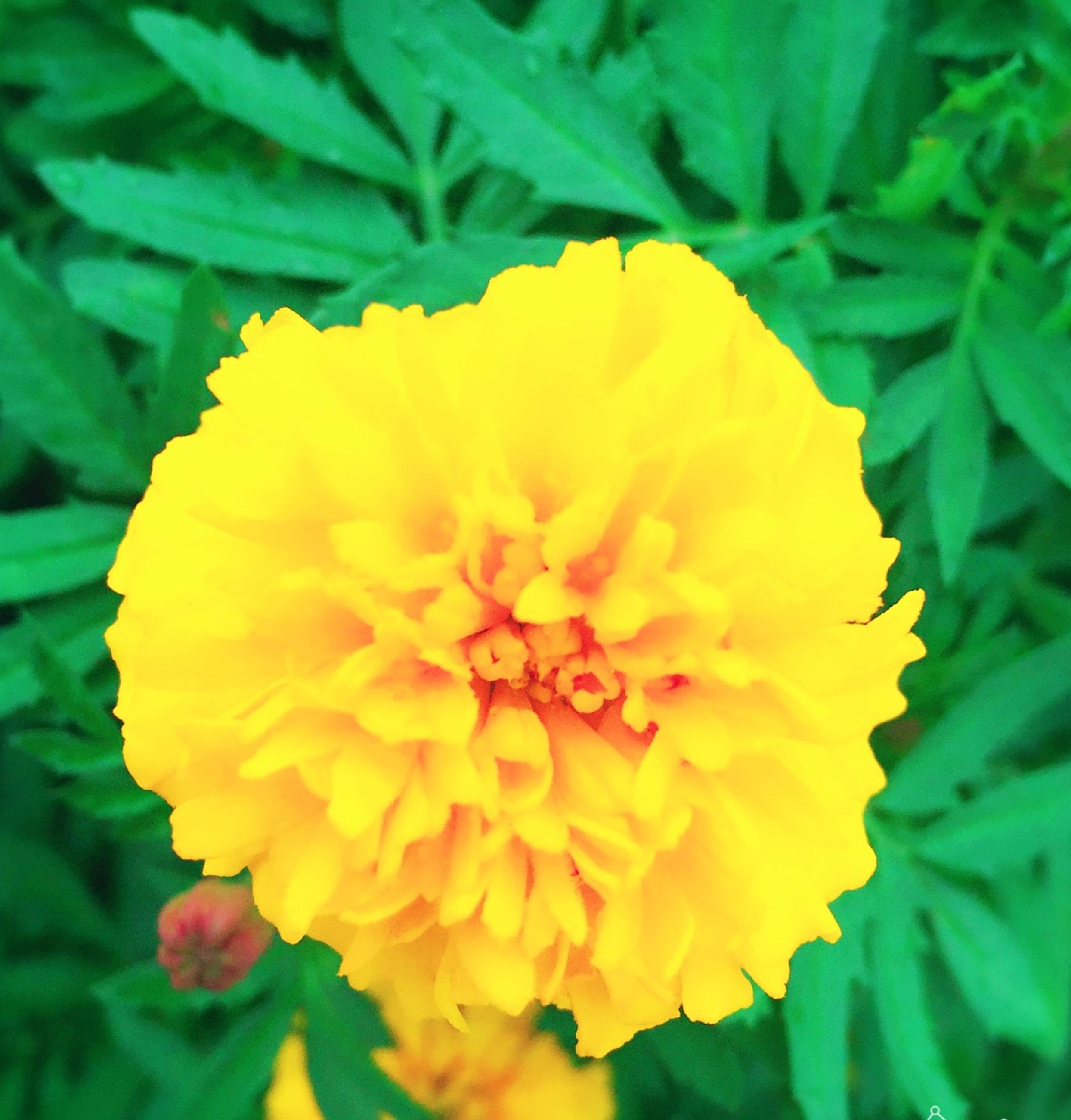 flower, freshness, flower head, petal, growth, fragility, beauty in nature, single flower, close-up, nature, yellow, plant, blooming, pollen, leaf, in bloom, blossom, focus on foreground, stamen, botany