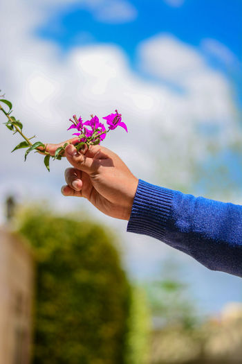 Cropped image of hand holding bougainvillea