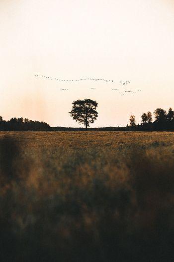 Birds on landscape against sky