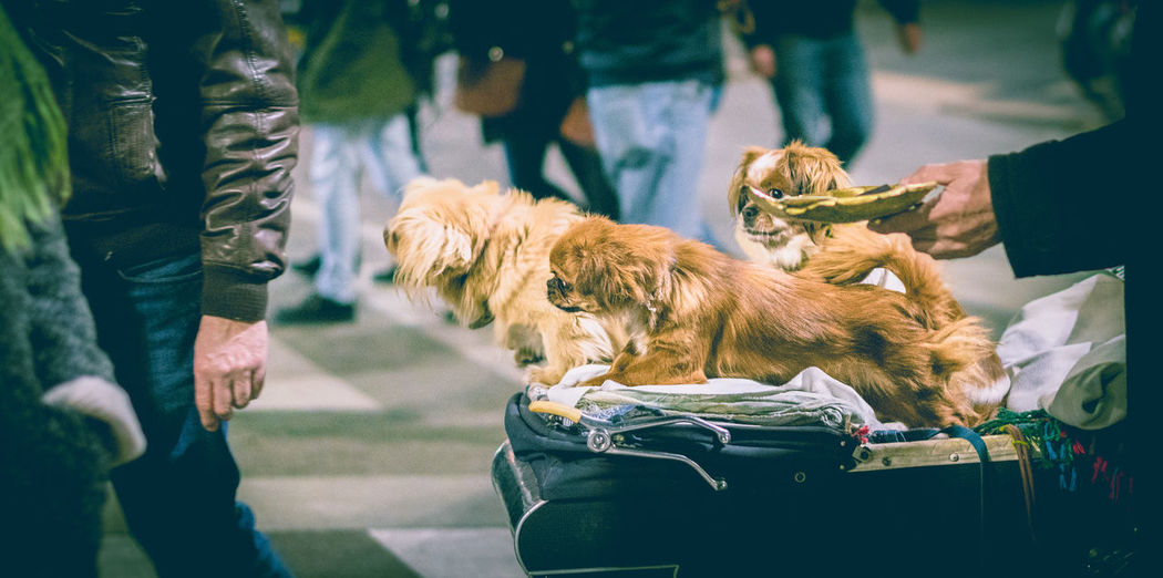 High angle view of dogs on luggage