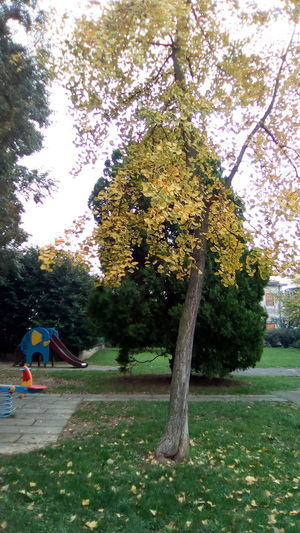 Tree Growth Nature Green Color Park - Man Made Space Yellow Beauty In Nature Outdoors No People Day Branch