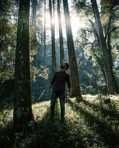Man standing by tree trunks in forest