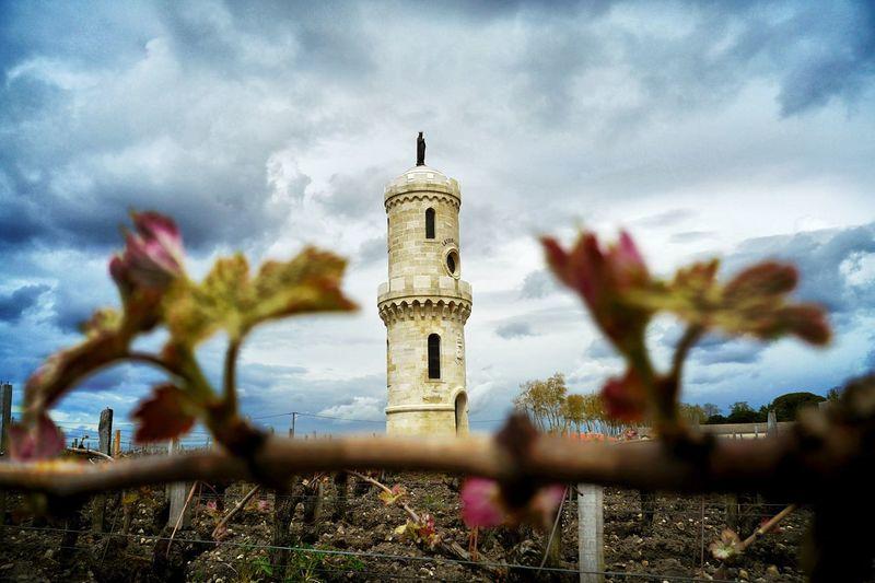Towering Tower Wine Wine Tasting Wineandmore Vineyard Médoc Panasonic DMC CM1 Monument Eye4photography  EyeEm Best Shots - Nature Symplicity EyeEm Nature Lover Blossom Grapes Grapefruit