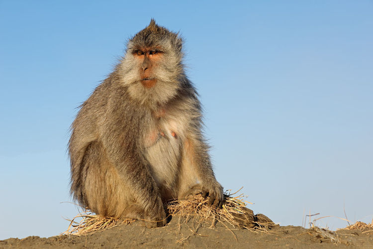 Monkey sitting against sky
