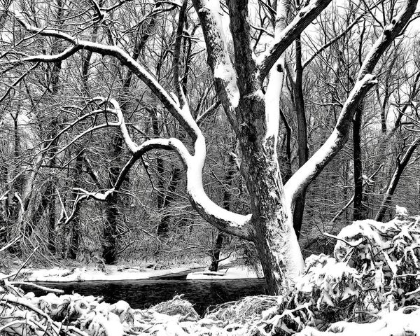 Cold Creek The Great Outdoors - 2018 EyeEm Awards Black And White Snowfall Tree Branch Nature Bare Tree Tree Trunk Day Tranquility Outdoors No People Beauty In Nature Winter