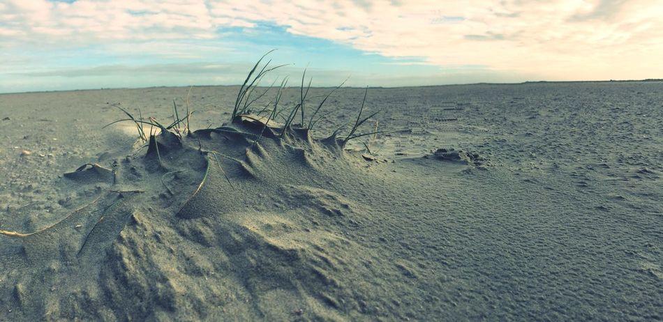 Sandland 2