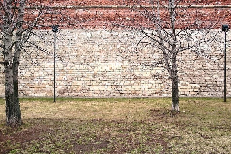 Mobilephotography Streetphotography Streetphoto_color Trees Walking Around Wall Minimalism Springtime