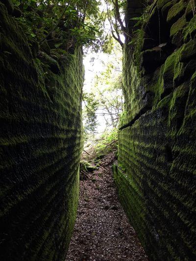 苔むした切り通し Mossy opencut Moss Rock Path Mt. Nokogiri Chiba Japan