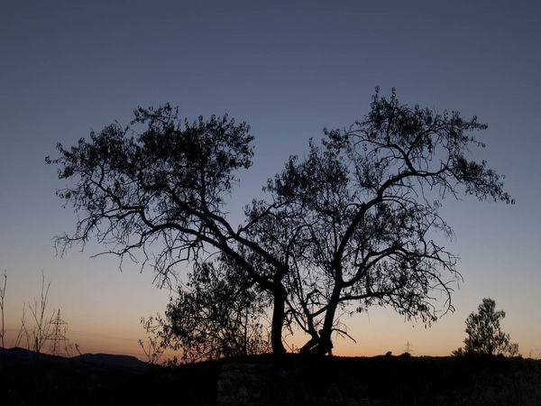 Almond Tree at Sunset n Can Mitjans Nature Sky