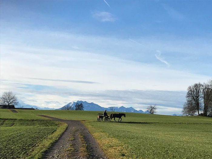 Snow Peaked Mountains Horse And Cart Sky Field Beauty In Nature Cloud - Sky Nature Tranquility Domestic Animals Mountain Shades Of Winter