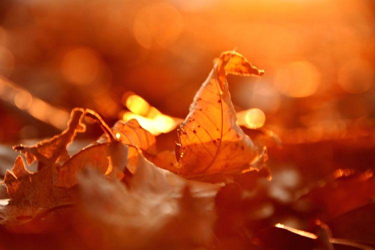 Autumn Autumn Leaves Bathedinthesunset Fallofjapan Japan 夕暮れ Terracottacolor テラコッタ 落ち葉 夕日を浴びて Startshine