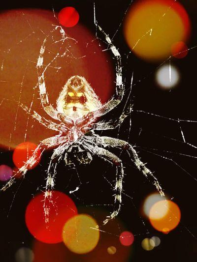 Spider First Eyeem Photo