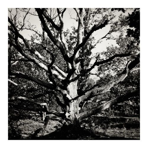 Monochrome Blackandwhite Tree Nature Branch Growth Outdoors Low Angle View Beauty In Nature No People