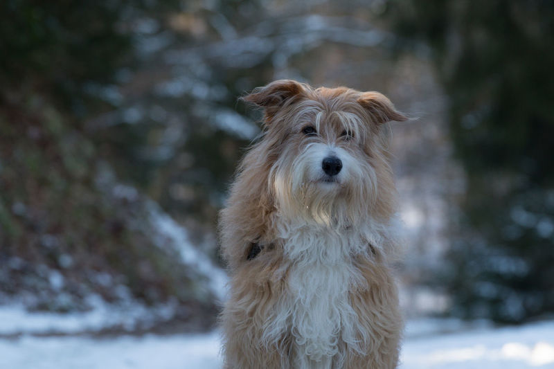Winter Animal Themes Cold Cold Temperature Day Domestic Animals Focus On Foreground Forest Looking At Camera Mammal Nature No People One Animal Outdoors Pet Pets Portrait Snow Wood - Material