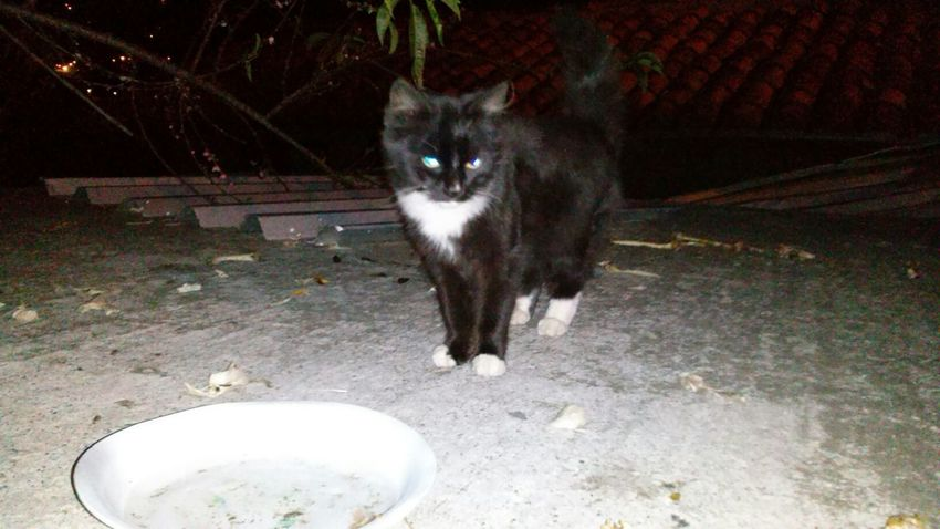 Kitty eat place... Roof Kitty Cat Nigth Shot Flash Country Cat Bones Cat Lover Trip