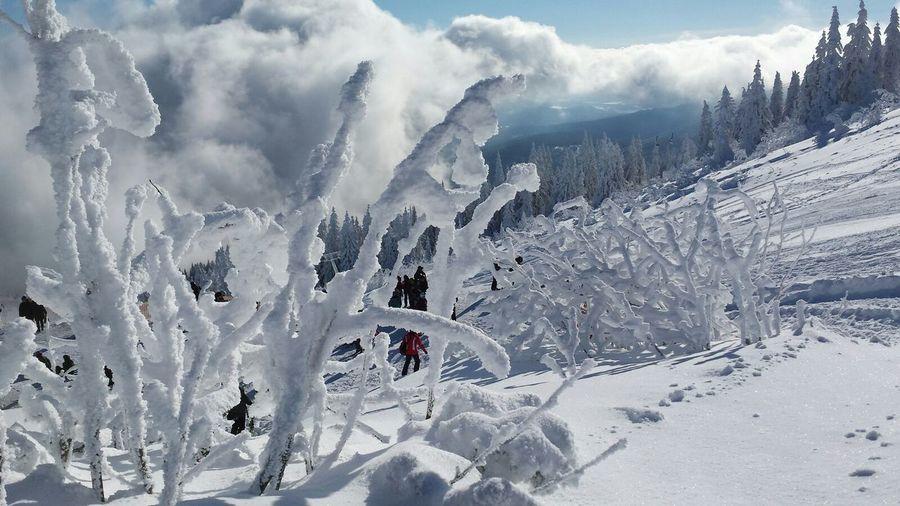 At the top... Winter Wonderland Deepfreeze Snow Skyporn The Purist (no Edit, No Filter) Hugging A Tree