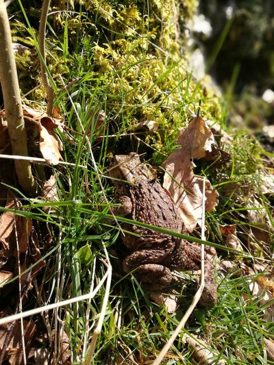 Toad in the Road Toads And Frogs Bufo Bufo Fragility After The Rain Wildlife & Nature Toad Sunlight Moss Forest Close-up Grass Plant