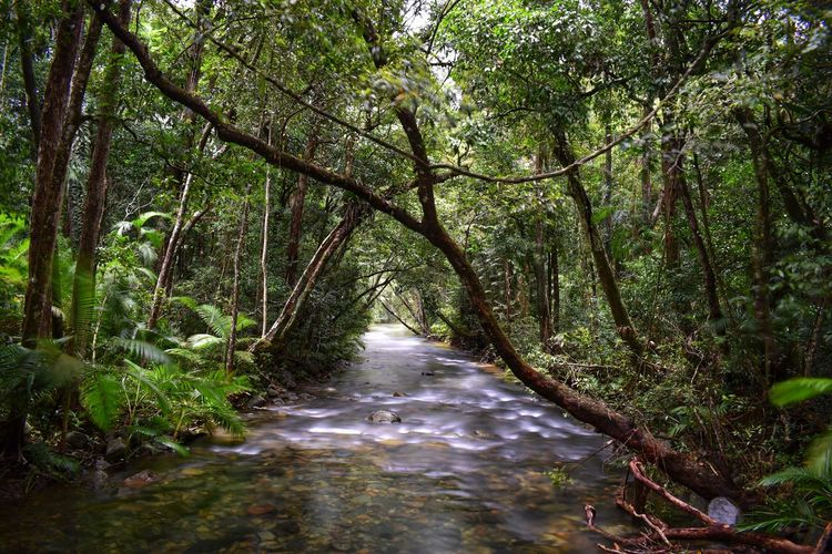 Tree Forest Plant Land Water Growth Nature Tranquility Beauty In Nature No People Scenics - Nature Day Motion Direction WoodLand Flowing Water Non-urban Scene Tranquil Scene Environment Outdoors Flowing Stream - Flowing Water Rainforest