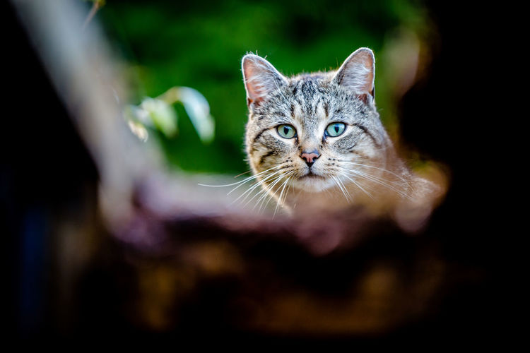 Cat looking through a hole Animal Eye Body Part Cat Close-up Domestic Domestic Animals Domestic Cat Eye Feline Focus On Foreground Looking At Camera Mammal No People One Animal Pets Portrait Sneaky Cat Tabby Whisker Young Animal