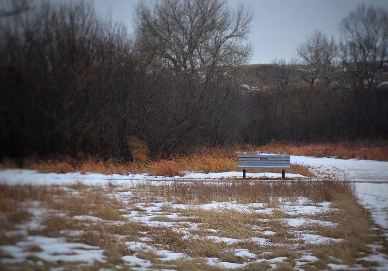 Winter EyeEm Best Shots Bench Overlooking Coulees Winter Bushes Snow Branches Benches & Branches IPS2016Winter