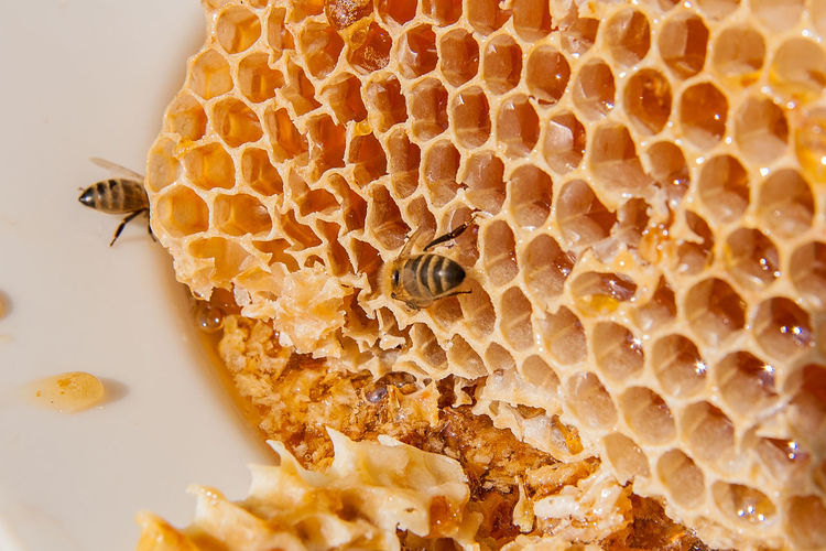 Animal Animal Themes Animal Wildlife Animals In The Wild APIculture Beauty In Nature Bee Beehive Close-up Food Food And Drink Group Of Animals Honey Honey Bee Honeycomb Insect Invertebrate Nature No People
