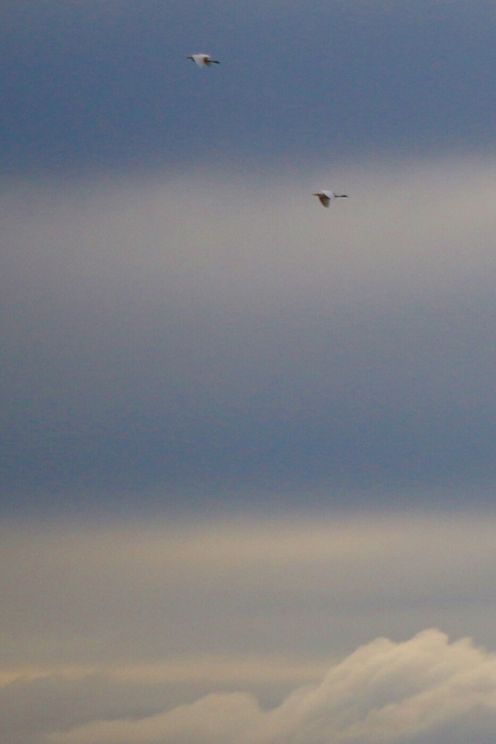 flying, bird, animal themes, animals in the wild, wildlife, mid-air, sky, one animal, low angle view, cloud - sky, nature, beauty in nature, spread wings, scenics, airplane, tranquility, outdoors, sunset, no people, tranquil scene
