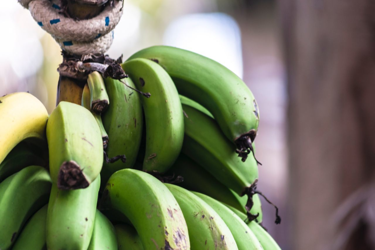 healthy eating, green color, fruit, close-up, food and drink, food, wellbeing, banana, freshness, no people, focus on foreground, day, insect, selective focus, invertebrate, animal themes, animal, animal wildlife, outdoors, growth, ripe
