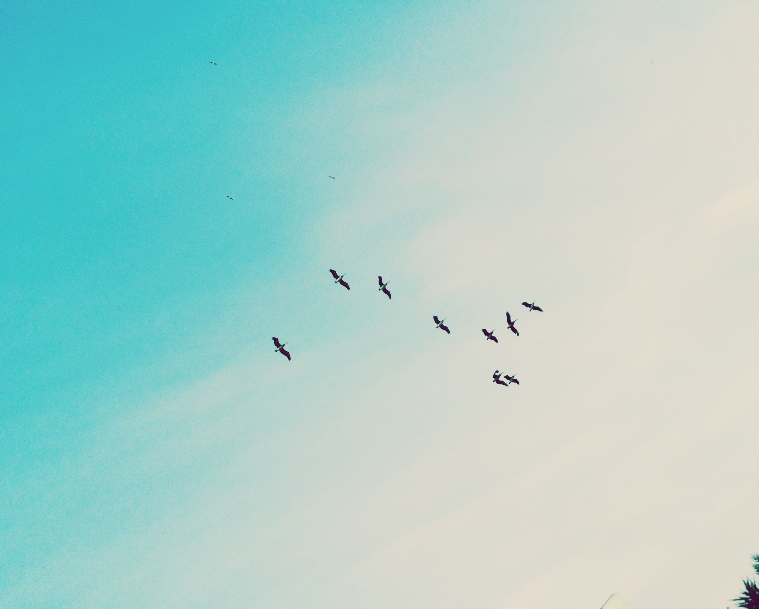 bird, flying, animal themes, low angle view, animals in the wild, wildlife, flock of birds, sky, silhouette, mid-air, nature, beauty in nature, clear sky, blue, outdoors, no people, copy space, scenics, tranquility