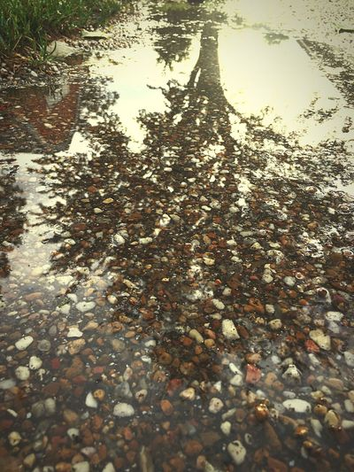 Water Reflection Puddle Stone - Object Tree High Angle View Pebble Day Nature Standing Water Outdoors Abundance Footpath Waterfront No People Tranquility Gravel Surface Level