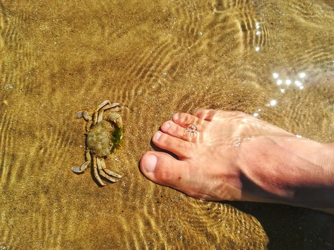 the crab and the foot Crab Animal Wildlife Animals In The Wild Beach Body Part Day Hand Human Body Part Human Foot Human Hand Land Marine Nature One Animal One Person Outdoors Real People Sand Sea Sunlight Water