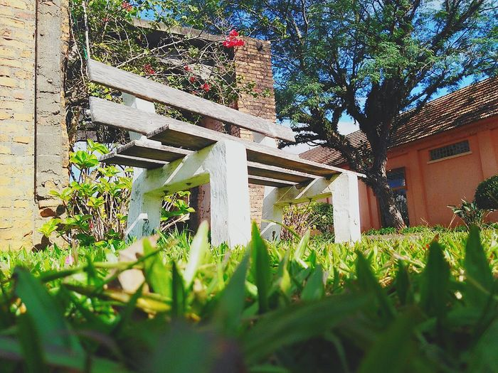 EyeEmNewHere Flower Plant No People Tree Grass Nature Architecture First Eyeem Photo Day Growth Outdoors Front Or Back Yard Low Angle View Built Structure
