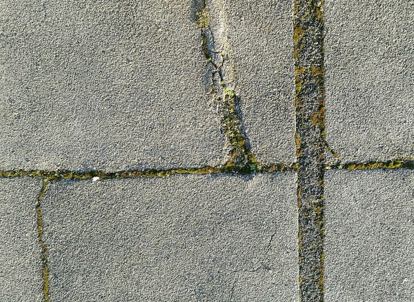 Backgrounds Pattern No People Close-up Textured  Outdoors Ground Asphalt Moss Plants Nature City Lines Naturefightsback  Growth