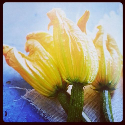 looks so good Courgetteflower NaturesBest