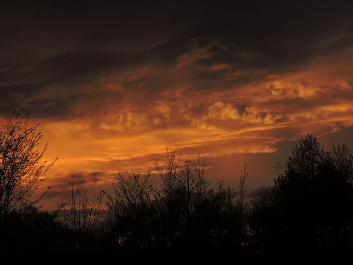 Sunset Sky Cloud - Sky Beauty In Nature Silhouette Tranquility Scenics - Nature Tranquil Scene Orange Color Tree Plant Nature No People Non-urban Scene Idyllic Outdoors Dramatic Sky Environment Landscape Growth