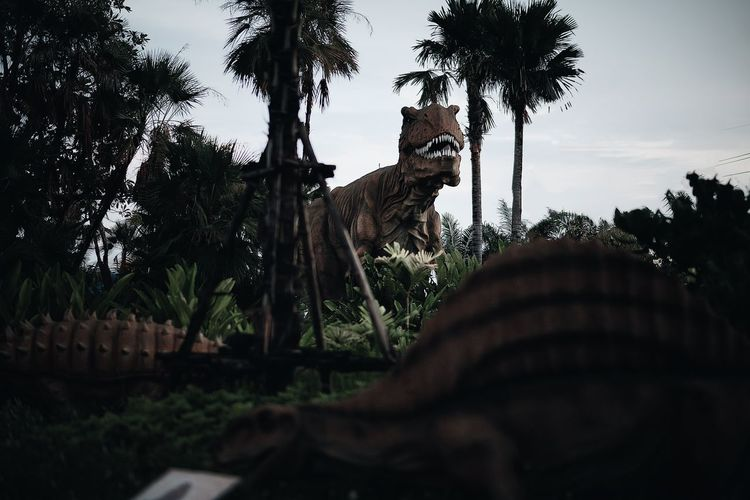 View of a dog on palm trees