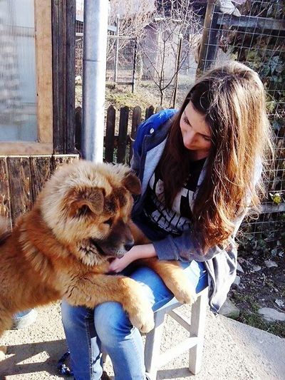 ChowChow Dogs Lovehim My Everything Sunny Day Portrait Happiness