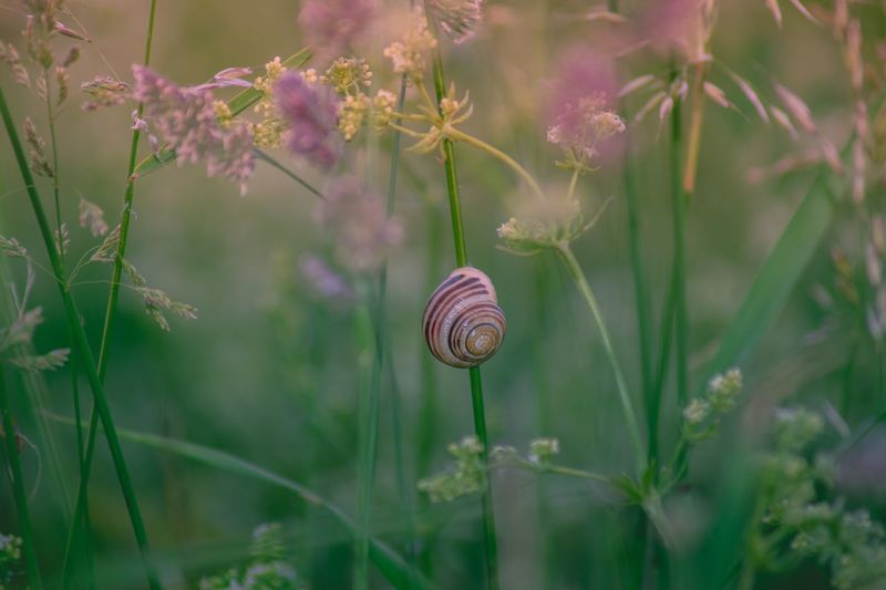 Snail Gastropod One Animal Fragility Wildlife Animal Themes Plant Nature Spiral Animals In The Wild No People Outdoors Leaf Day Flower Close-up