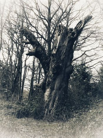 The Haunted Tree Haunted Places Halloween 2017 Tree Day Low Angle View Nature Outdoors Branch No People Bare Tree Beauty In Nature Sky Close-up Autumn Autumn Collection EyeEm Selects EyeEm Best Shots EyeEm Gallery Eyeem Photography EyeEm Best Edits Eyeem Market EyeEmBestPics Edited Art Photography Tree