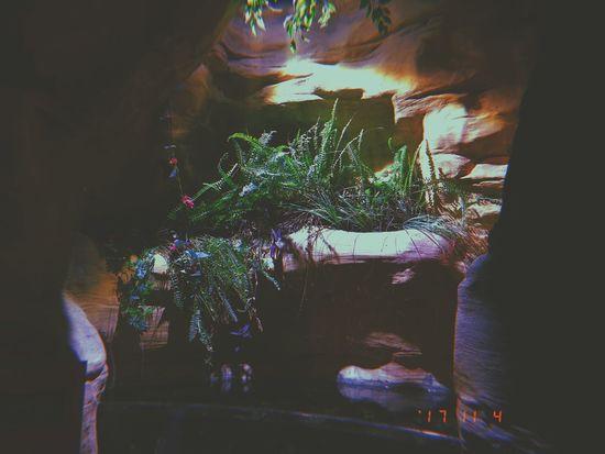 Rocks Aesthetics Night Indoors  Illuminated Plant No People Nature