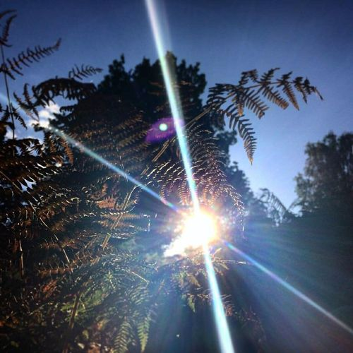 Sun flare Sun Sunflare Fern Nature Nature_collection Nature Photography Landscape Green Natural