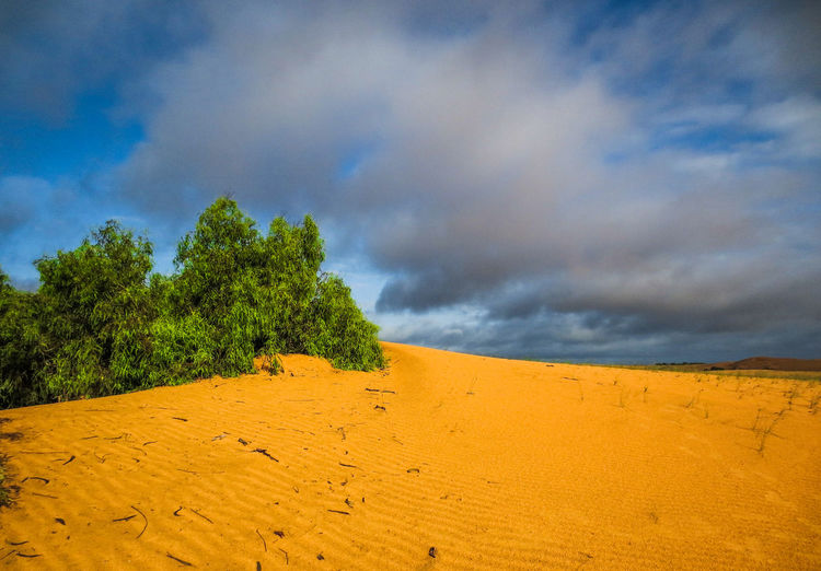 Lompoul Desert Cloud - Sky Sky Beauty In Nature Scenics - Nature Tranquil Scene Land Plant Tree Tranquility Landscape Sand Environment Nature Non-urban Scene No People Yellow Day Growth Idyllic Outdoors Arid Climate Climate Senegal Desert Desert Beauty