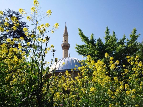 Yellow Yellow Flower Islam Islamic Mosque Mosques Cami Camii Ramadan  Ramazan Anatolian Mosque Turkey Mosques Of The World Mosquito My Favorite Photo 43 Golden Moments Break The Mold Art Is Everywhere TCPM EyeEmNewHere BYOPaper! Visual Feast Neighborhood Map The Street Photographer - 2017 EyeEm Awards The Great Outdoors - 2017 EyeEm Awards The Architect - 2017 EyeEm Awards The Photojournalist - 2017 EyeEm Awards The Portraitist - 2017 EyeEm Awards Sommergefühle EyeEm Selects Wine Not EyeEm LOST IN London Neon Life Be. Ready. Adventures In The City This Is Latin America Going Remote Visual Creativity The Architect - 2018 EyeEm Awards The Photojournalist - 2018 EyeEm Awards