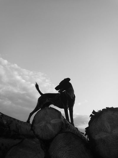 One Animal Animal Themes Pets Dog Outdoors Blackandwhite Black & White Monochrome Photography Animal Nature Tree