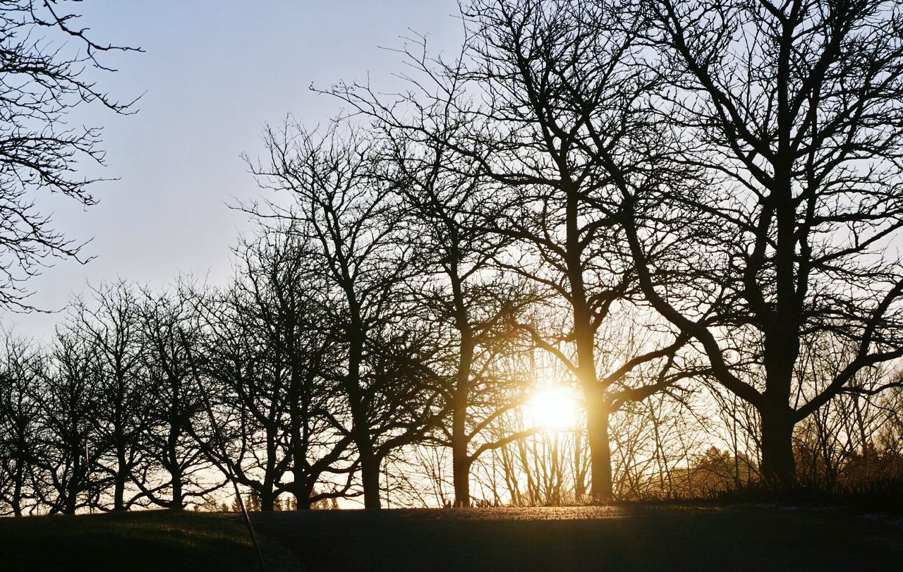 Silhouette Bare Trees On Field Against Clear Sky During Sunset