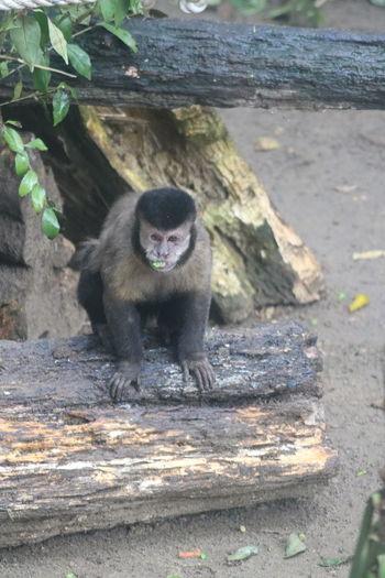 Primate Animals