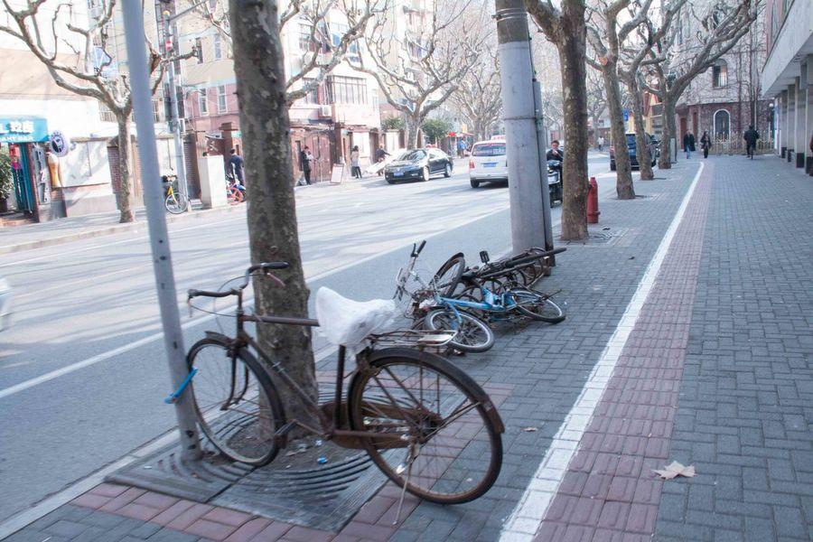 Bicycle City Outdoors Peaceful Screenshot Shanghai Streetphotography Tree 番禺