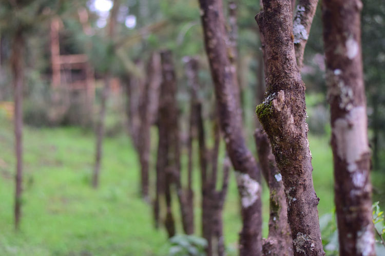fence made from branches EyeEm Nature Lover Beauty In Nature Day Environment Focus On Foreground Forest Grass Green Color Growth Land Nature No People Outdoors Plant Selective Focus Tranquil Scene Tranquility Tree Tree Trunk Trunk WoodLand