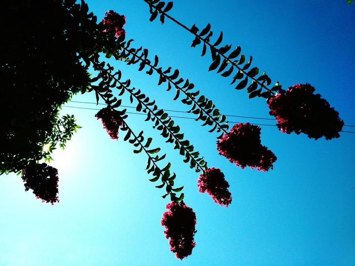 Sky Flying Silhouette No People Tree Motion Outdoors Flower Collection Pink Flower 🌸 Beauty In Nature Close-up Flower Head Flores Copetes Flower Photography Flowers Of EyeEm