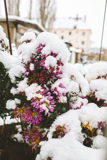 Close-up of frozen flowering plant during winter